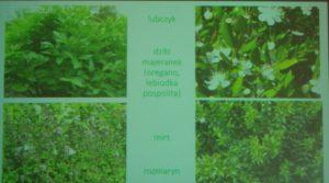 """""""Rośliny miłosne"""" - prelekcja w Czytelni Naukowej"""