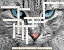 krzyżówka - kocie rasy