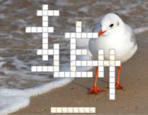 krzyżówka o Morzu Bałtyckim; w tle krzyżówki zdjęcie, na którym biała mewa stoi na plaży tuż przy brzegu morza